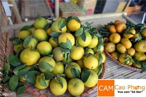 Phân biệt cam Cao Phong với cam Trung Quốc
