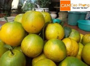 Những trái cam mọng nước