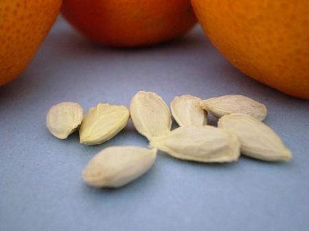 mặt nạ từ hạt cam